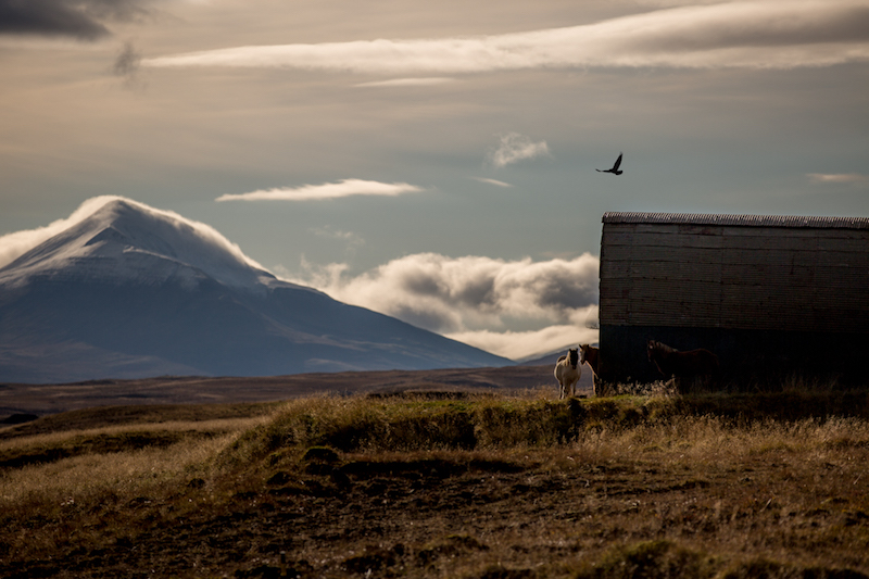 horses near a barn with a mountain in the background North Coast Iceland
