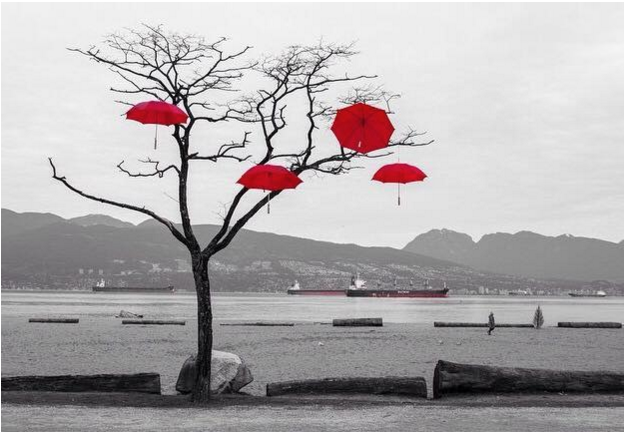 Black and white image of a tree in front of a body of water with red umbrellas floating in its branches