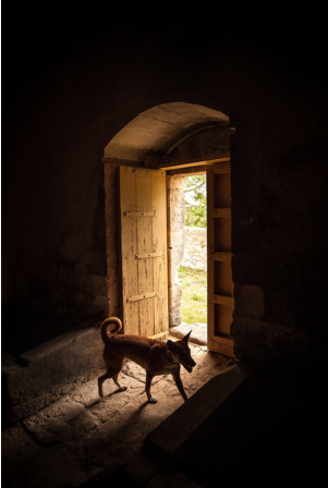 shot of a dog in a cellar door at a winery in Sicily